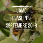 flash-n9-septembre-2018
